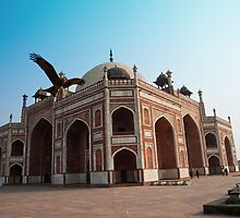 Hawk flying next to Humayun Tomb Delhi by ashishagarwal74