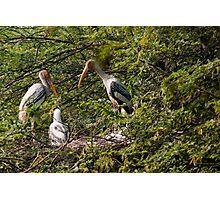 Storks around a nest Photographic Print