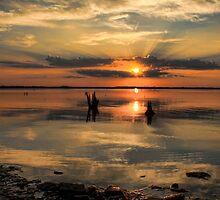 Summertime by Carolyn  Fletcher