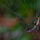 Orb-weaver spider having lunch on a rainy day. by Stephen Brown