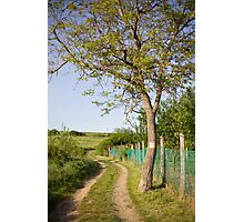 Rural tranquility. Photographic Print