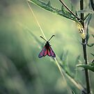 Moth by lorrainem