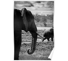 An Elephant Knows Best... Poster