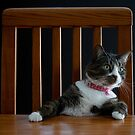 Where's My Dinner? by Mark Van Scyoc