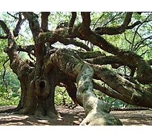 Angel Oak 2 Photographic Print