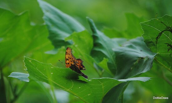 Comma Butterfly by DottieDees