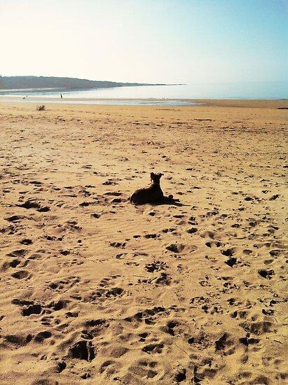 Beach. by STAFFYBULL