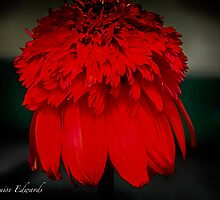 Red Feathers by LandLimages