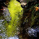 Stream of Green ! by Elfriede Fulda