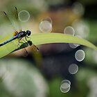 Dragon Fly Enjoying the View by Peter O'Hara