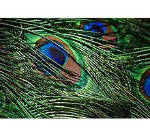 Iridescent plumage Photographic Print
