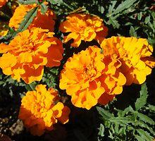 Orange explosion by Erika Ribeiro