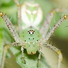 Spider! by vasu