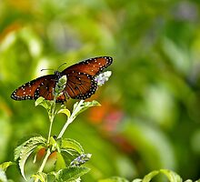 Butterfly Beauty by Chad Eastman