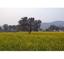 A field of mustard with a tree and mountains in the background Photographic Print
