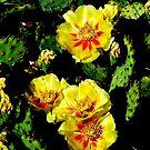 Prickly Pear by eyeland