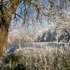 A frosty day in Abbey Fields, Kenilworth, UK. No. 2. by John Evans