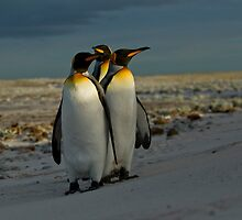 King Penguin by MarkHRoberts
