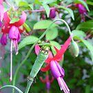 Poppy Head Beetle by Amanda Clegg