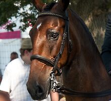 Hackney horse by neverwinter