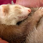 Sleeping ferret by neverwinter