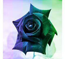 Spring Rose Photographic Print