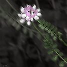 Crown Vetch Mindscape by Wayne King