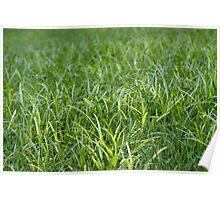 Grass in the desert Poster