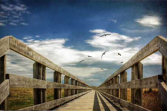 The Boarwalk by Amanda White