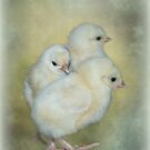 Three Chicks by Karen Martin