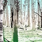 Birch Forest by perkinsdesigns
