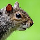 Squirrel 055 by Magic-Moments