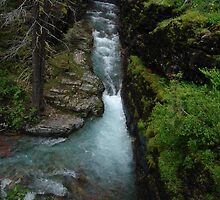 AVALANCHE CREEK, GLACIER NATIONAL PARK by May Lattanzio
