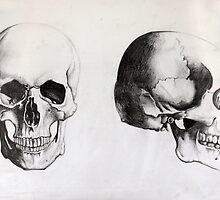 Human Skull - Frontal & Profile by Lara Rose Creative