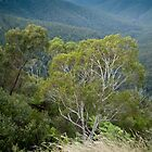 Govetts Leap Blackheath NSW by Jeanne Kinninmont