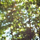 Tree Leaf Bokeh by lindsycarranza