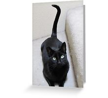 Gracie seems to have a ?. Greeting Card