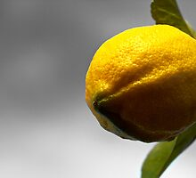 Simply a Lemon by Kate Halpin