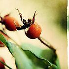 Rosehip by BecDphotography