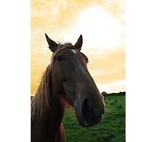 horse head portrait Photographic Print