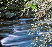 SPRING,LITTLE RIVER by Chuck Wickham