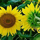 Turn Around - Follow The Sun by jules572