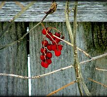 Berries © by Dawn M. Becker