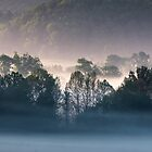 Fog Backlit Tree Line Silhouette in the Valley, Cades Cove, Smoky Mountain National Park by Mike Koenig