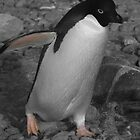 Adele Penguin by rosepetal2012
