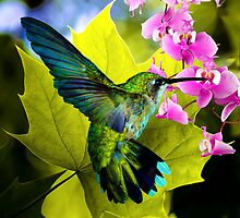 THE HUMMING BIRD by Elizabeth Giupponi