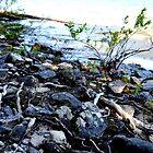 Rocky Beach by Ezra-David Saul