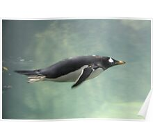 """""""Swimming Penguin""""  by Carter L. Shepard Poster"""