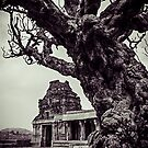 An Old Tree In Hampi by KerryPurnell
