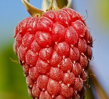 Raspberry by Moonlake
